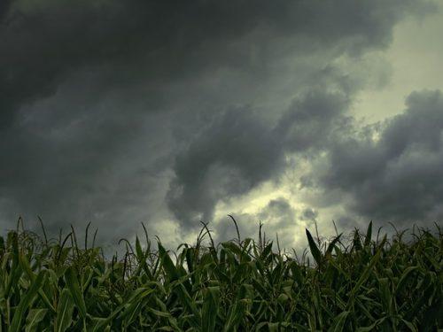Come le Nuvole – di Davide Daloisio