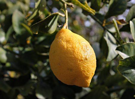 Limone: un frutto dalle mille proprietà