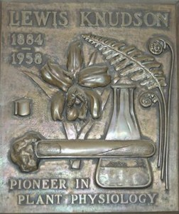 Lewis Knudson