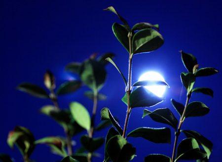 Notturno – di Davide Daloisio
